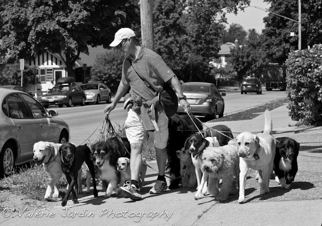Ne Minneapolis Dog Walking