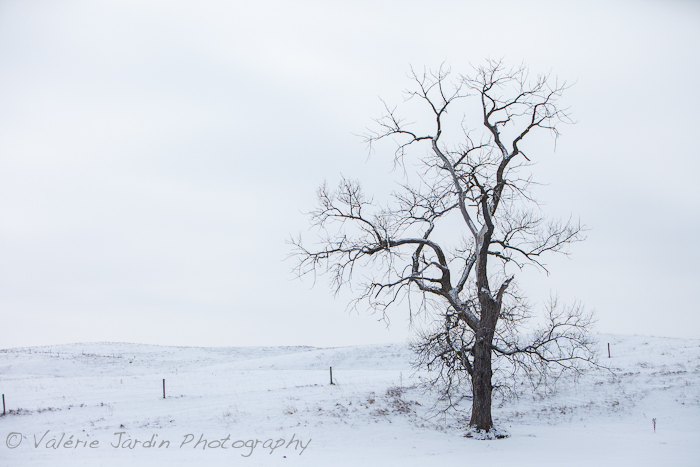 winter drive-1