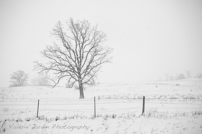 Winter Storm-3