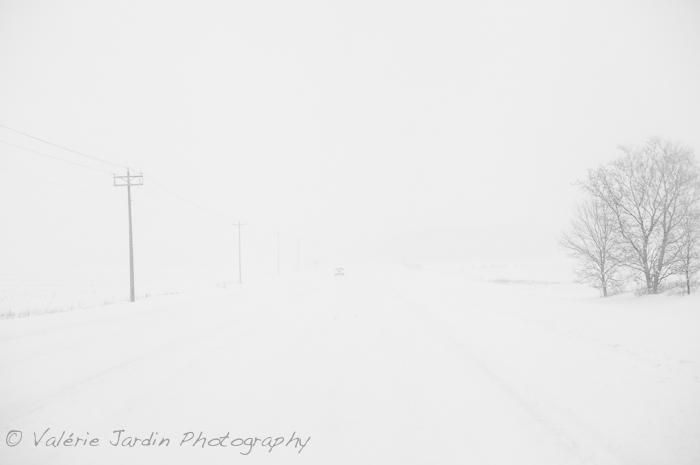 Winter Storm-4