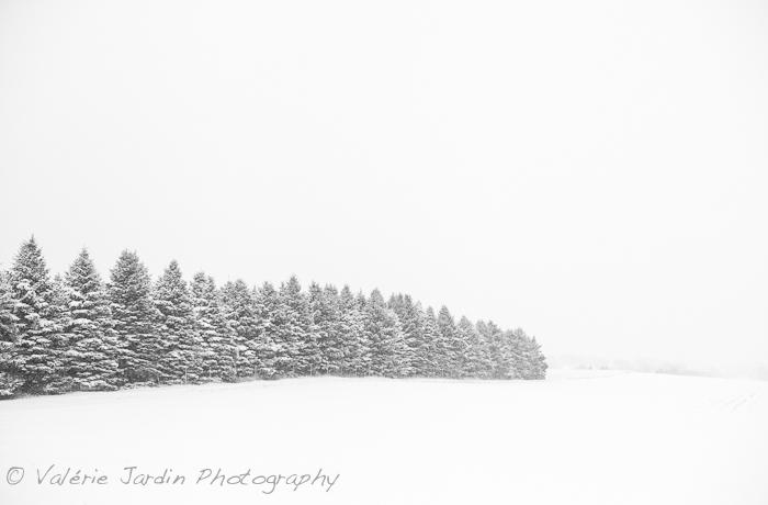 Winter Storm-6