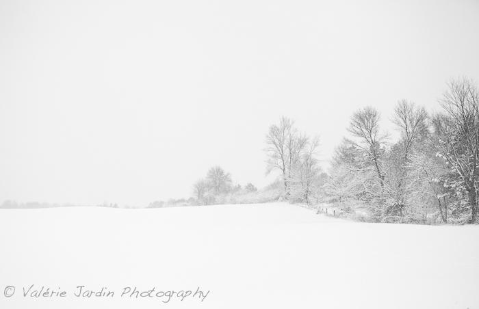 Winter Storm-7