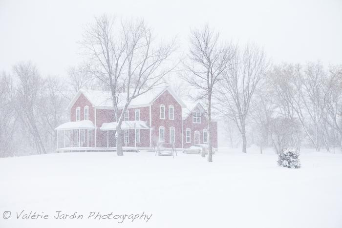 Winter Storm-8