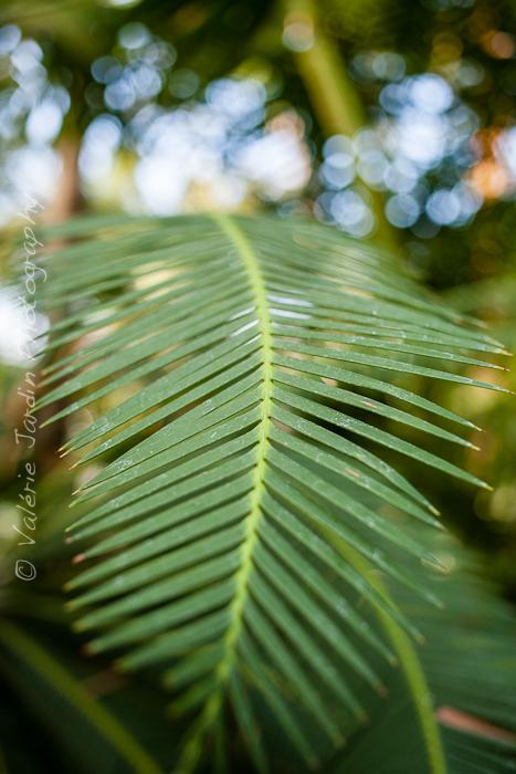 Palm tree-10
