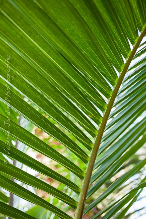 Palm tree-11