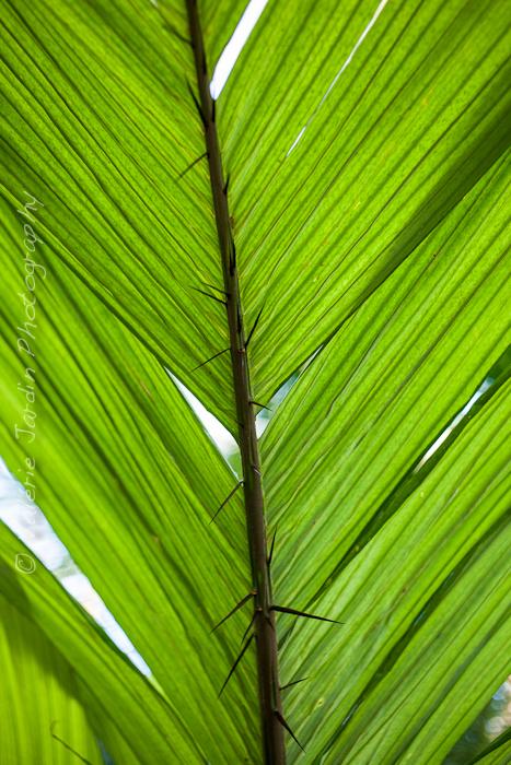 Palm tree-12
