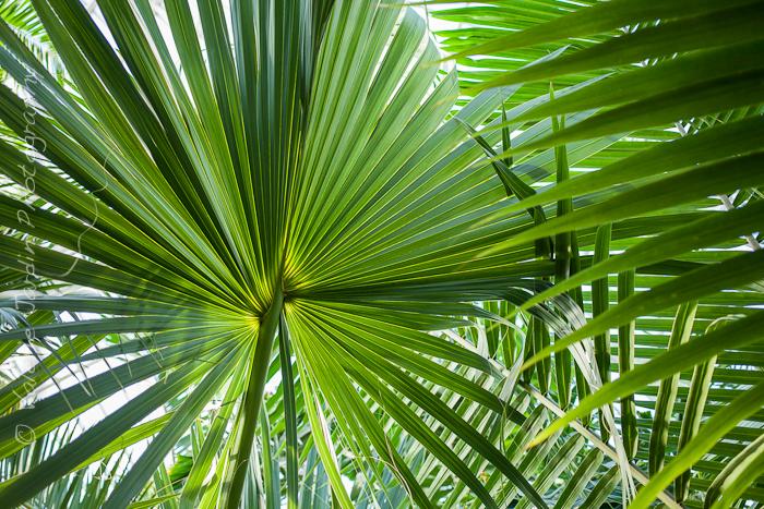 Palm tree-3