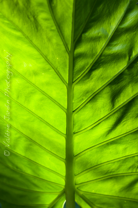 Palm tree-5