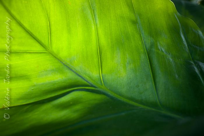 Palm tree-7