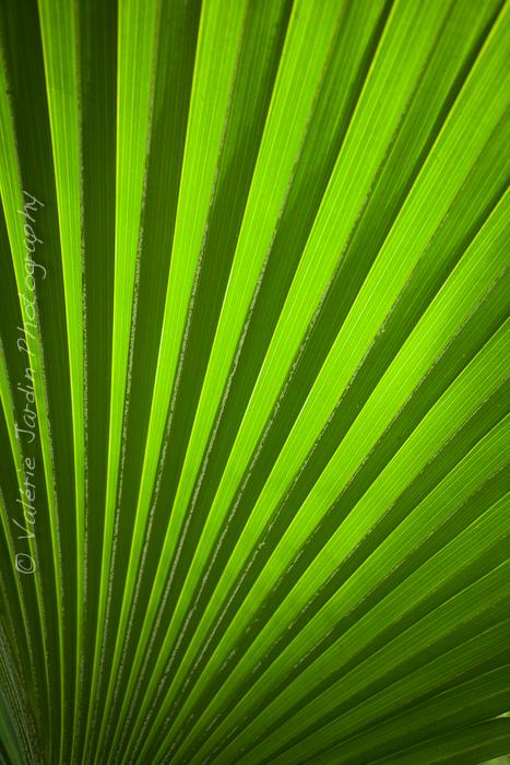 Palm tree-8