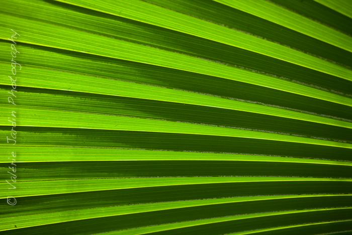 Palm tree-9