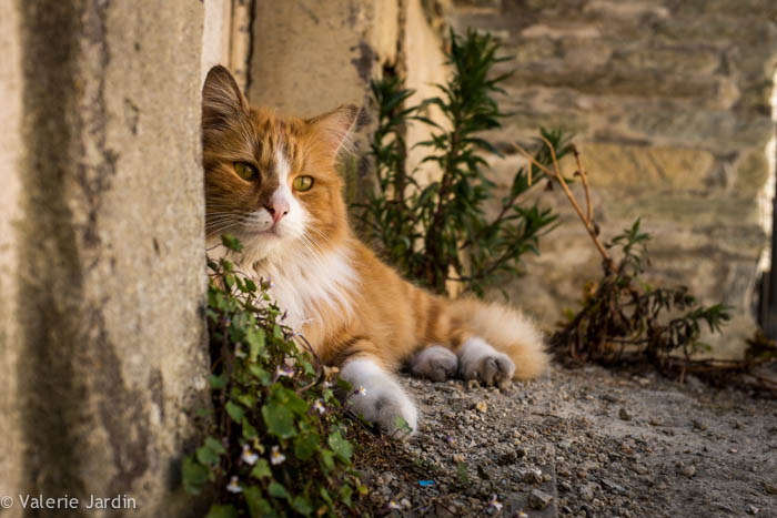 Valerie Jardin Photography - cat-1