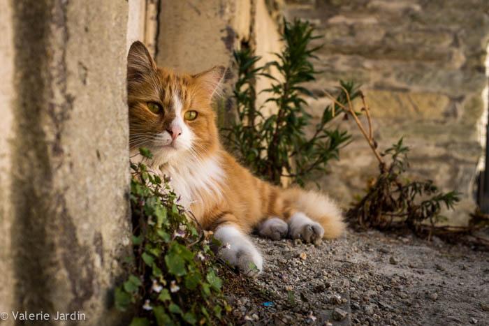 Valerie Jardin Photography - cat-1