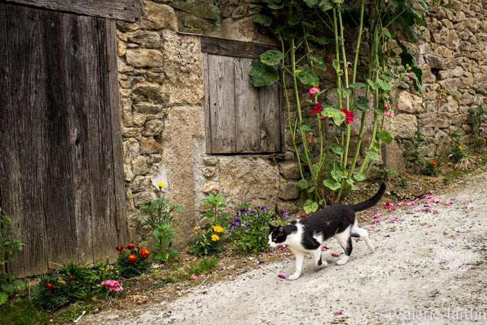Valerie Jardin Photography - cat on a mission-1
