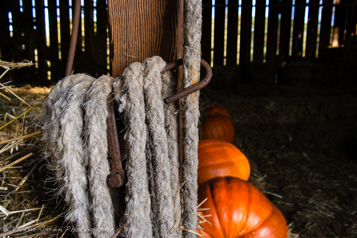 valerie Jardin Photography - Farm-10