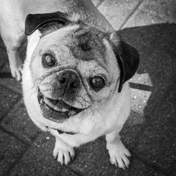 valerie Jardin Photography - pets in street photography-10