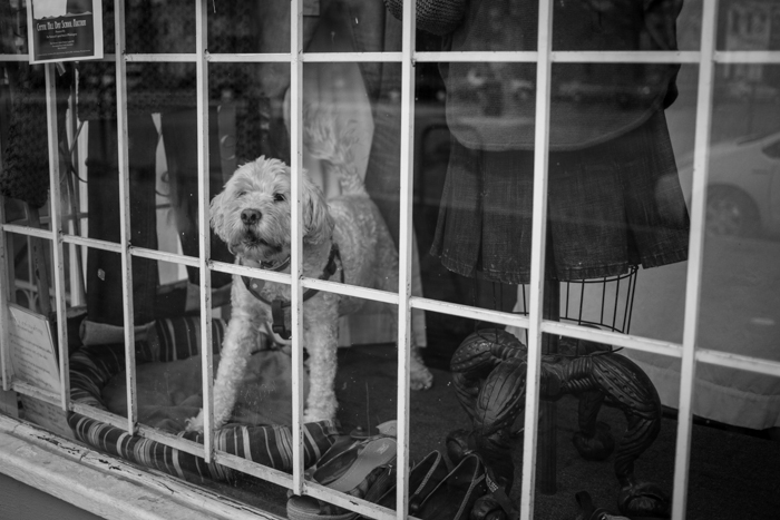 valerie Jardin Photography - pets in street photography-18