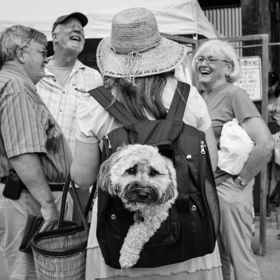 valerie Jardin Photography - pets in street photography-9