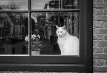 NL - ©Valerie Jardin