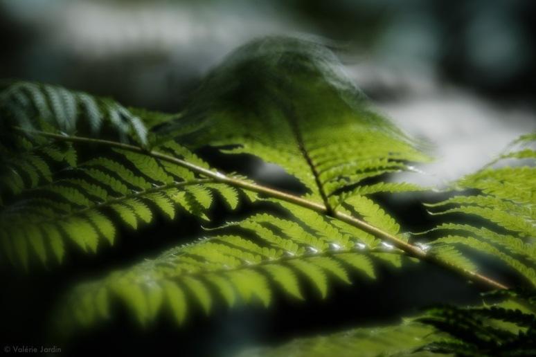 ©Valerie Jardin - Lensbaby Velvet and ClassicChrome-1