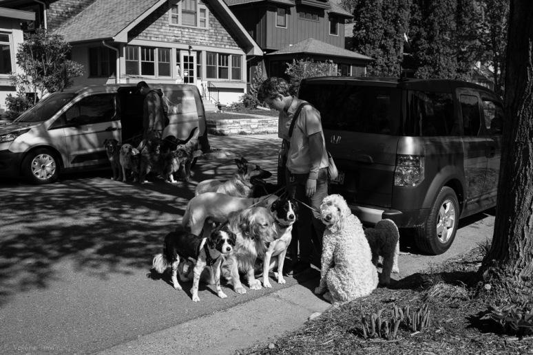 ©Valérie Jardin - Curtis and dogs-1
