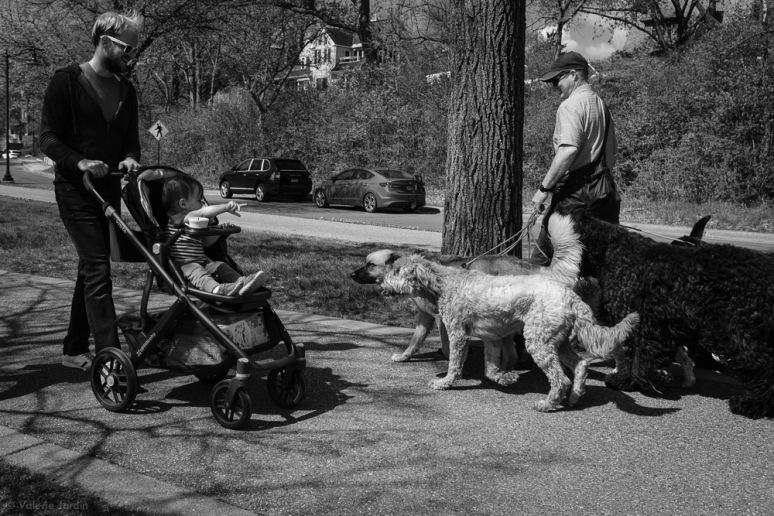 ©Valérie Jardin - Curtis and dogs-10