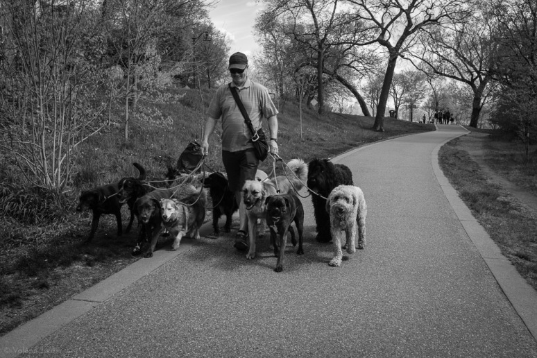 ©Valérie Jardin - Curtis and dogs-11