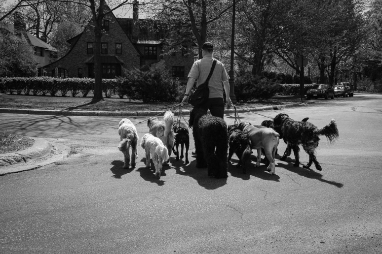 ©Valérie Jardin - Curtis and dogs-14