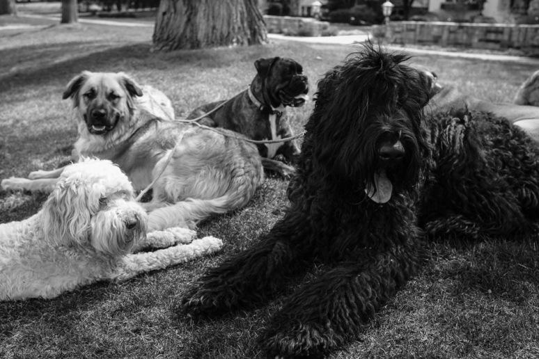 ©Valérie Jardin - Curtis and dogs-16