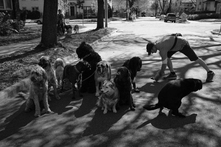 ©Valérie Jardin - Curtis and dogs-2