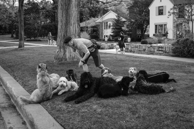 ©Valérie Jardin - Curtis and dogs-21