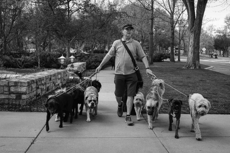 ©Valérie Jardin - Curtis and dogs-23