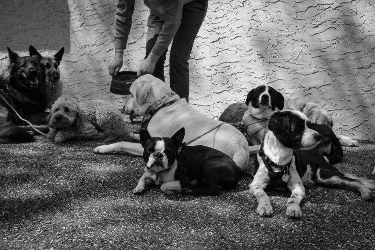©Valérie Jardin - Curtis and dogs-24