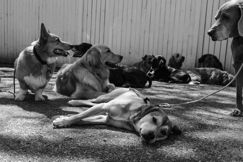 ©Valérie Jardin - Curtis and dogs-25