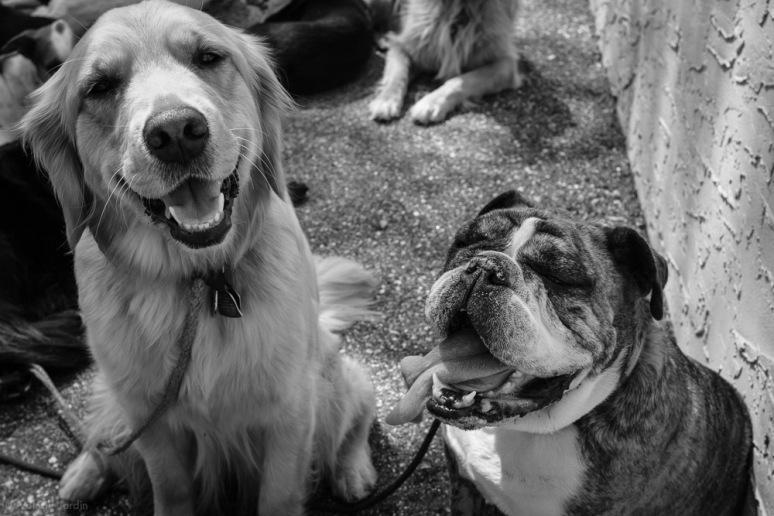 ©Valérie Jardin - Curtis and dogs-29