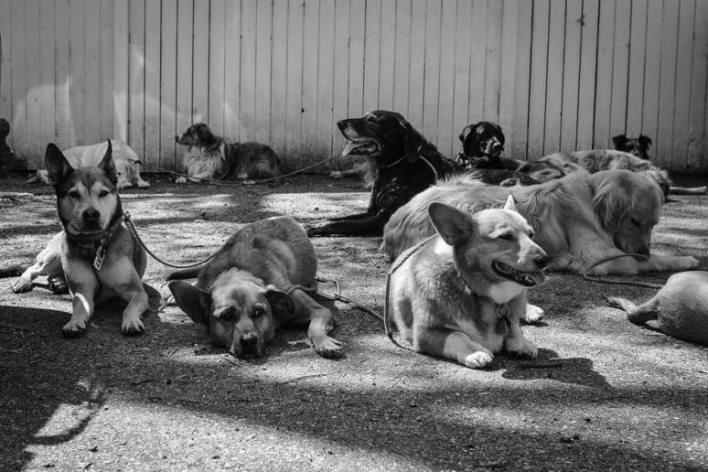 ©Valérie Jardin - Curtis and dogs-32