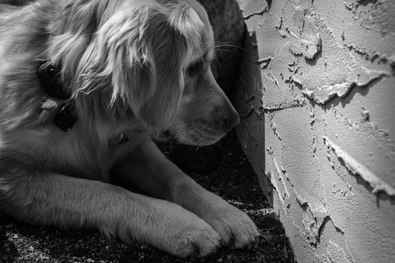 ©Valérie Jardin - Curtis and dogs-34