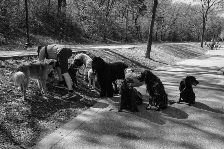 ©Valérie Jardin - Curtis and dogs-4