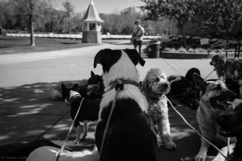 ©Valérie Jardin - Curtis and dogs-6