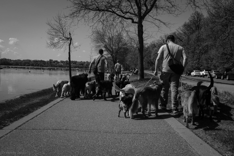 ©Valérie Jardin - Curtis and dogs-9