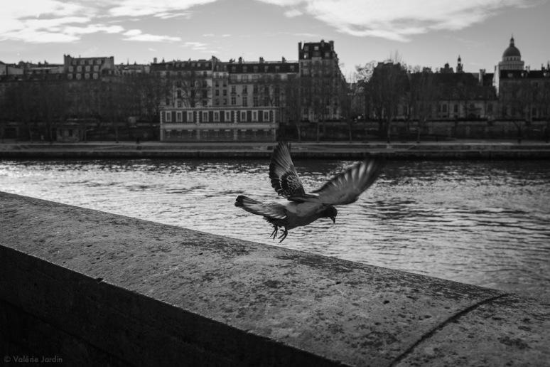 ©Valérie Jardin - Paris Jan 2019-1
