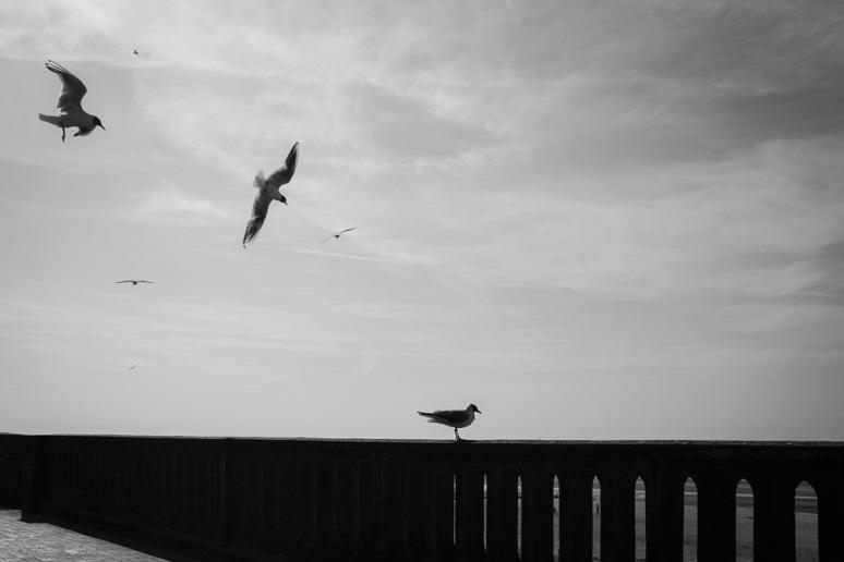 ©Valérie Jardin - Normandy-1