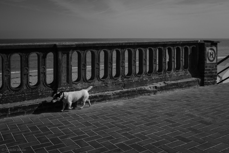 ©Valérie Jardin - Normandy-13