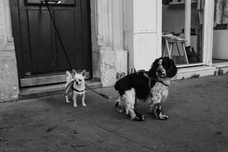 ©Valérie Jardin -Paris-19