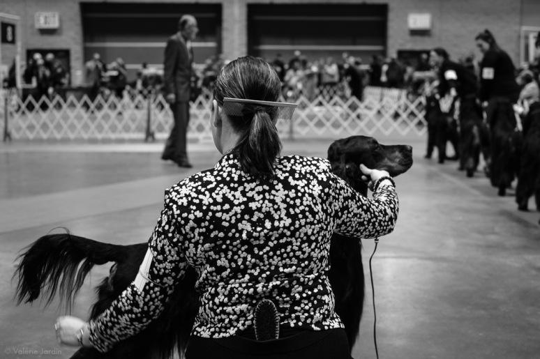 Copyright Valérie Jardin - Dog show-17