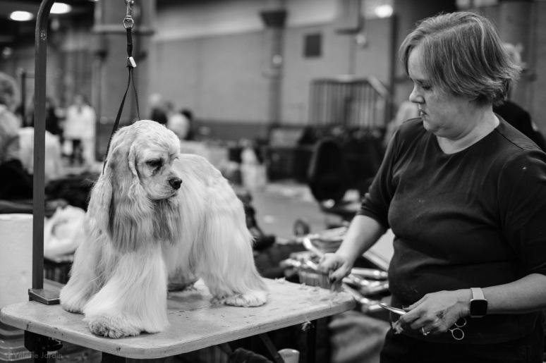 Copyright Valérie Jardin - Dog show-19