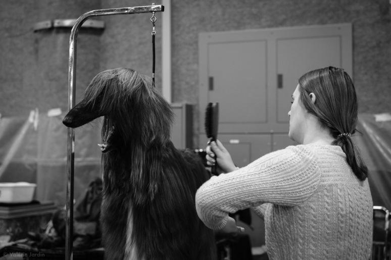 Copyright Valérie Jardin - Dog show-22