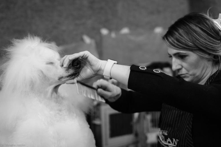 Copyright Valérie Jardin - Dog show-23