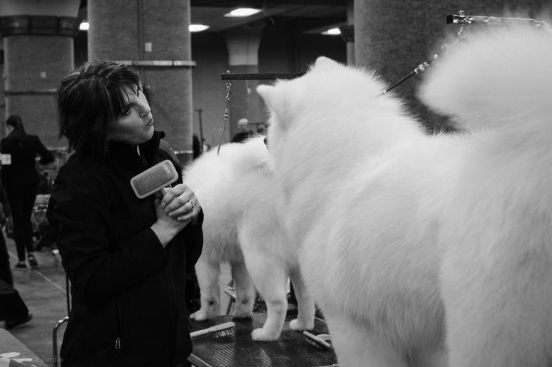 Copyright Valérie Jardin - Dog show-26