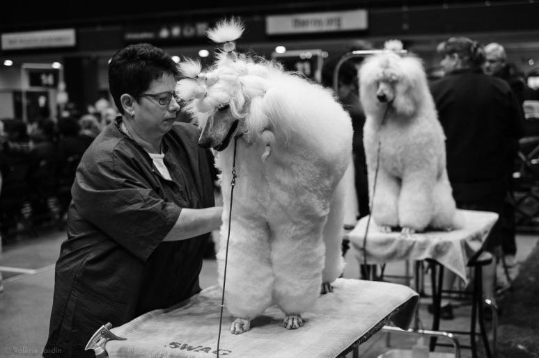 Copyright Valérie Jardin - Dog show-7